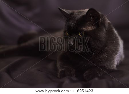 Black Cat On Lying In A Profile On A Black Background