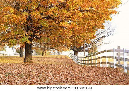 Fall scenes in Nashville