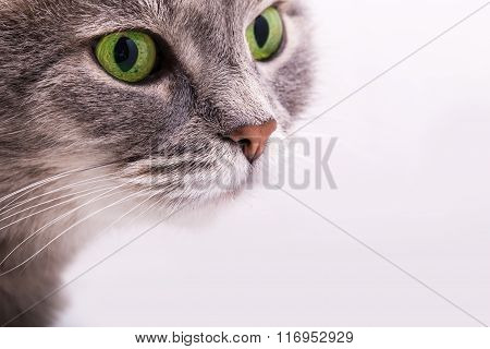 Tender Look Of A Gray Cat With Green Eyes