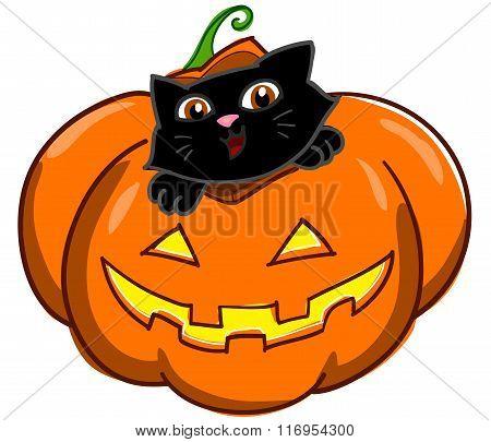 Cat and Jack o Lantern