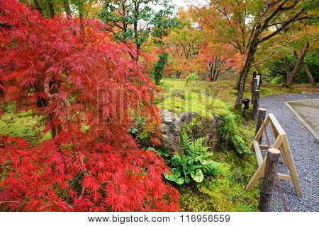 Fall Foliage At Eikando Temple, Kyoto
