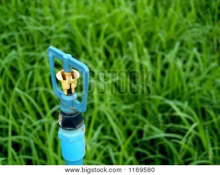 im Gras 2 Sprenger