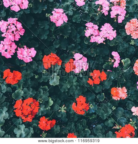 Bed of flower. Nature background. View from top.