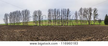Leaveless Trees In Winter Inrural Area