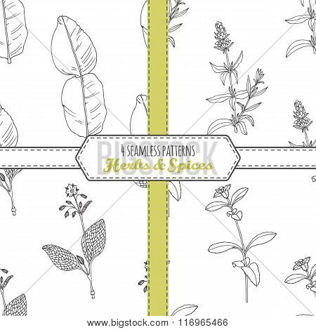 Hand drawn seamless patterns collection with kaffir lime, borage, hyssop, stevia