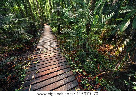 Wooden walkway in the tropical forest