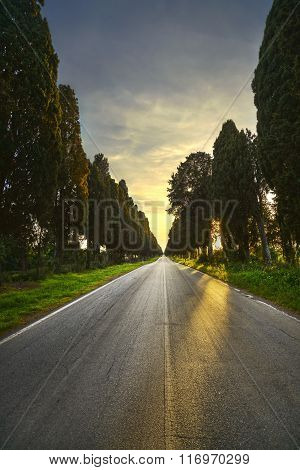 Bolgheri Famous Cypresses Tree Straight Boulevard On Backlight Sunset. Maremma, Tuscany, Italy