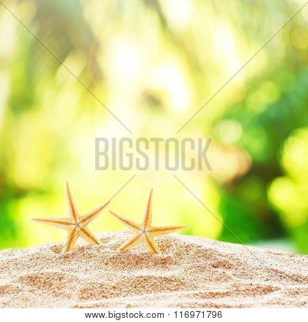 Starfishes on sand against blurred nature background