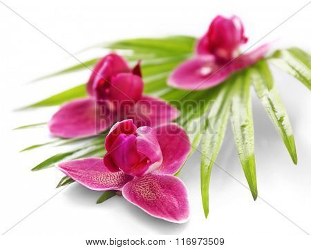 Orchid flowers and palm leaves, isolated on white