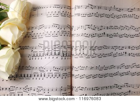 Beautiful rose on music sheets background