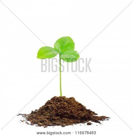 Green sprout growing isolated on white background