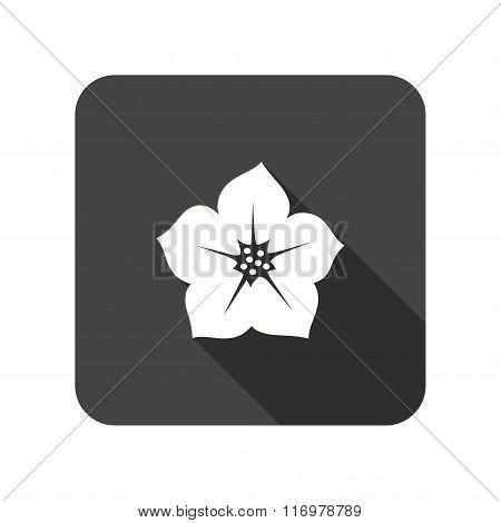 Petunia flower icons. Floral symbol.