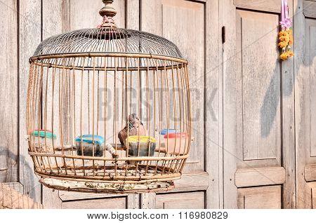 Bird in a vintage birdcage