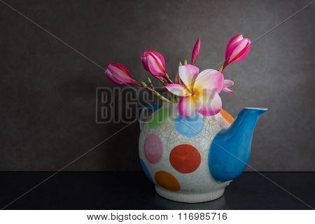 Still Life Lovely Plumeria Flower In Colourful Tea Pot