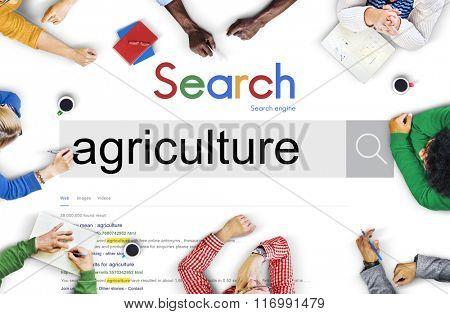 Agriculture Crops Produce Farming Concept