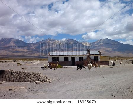 House In Colchane At Chilean Border At Altiplano