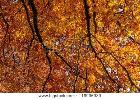 Orange Leaves Over Branches In Autumn Forest. Background With Autumn Leaves, Natural Texture Orange