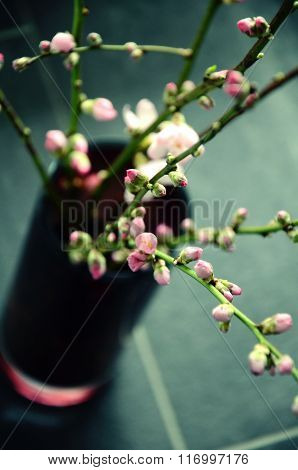 Almond tree twigs with petal buds and blossom in a vase