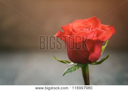 red rose on wood table with copy space for something