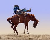 picture of bronco  - Bucking Rodeo Horse isolated with clipping path
