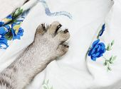 Cats leg close up, only cat leg, cat leg close up, domestic animal fragment photo, cat hiding, cat l poster