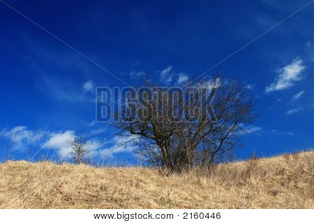 The Dead Bush On Blue Sky Background