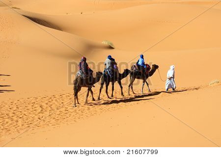 Tren de camello