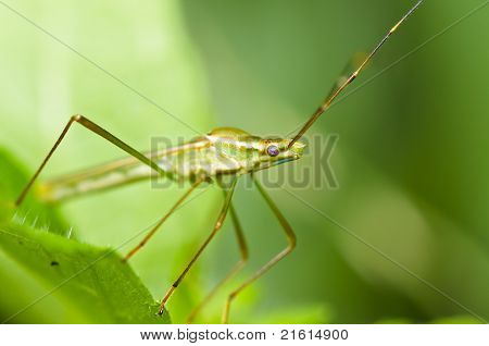daddy-long-legs on green leaf