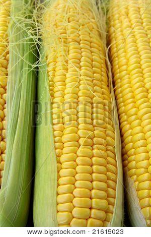 Closeup gelber Mais mit zusätzlichen Ähren im Hintergrund