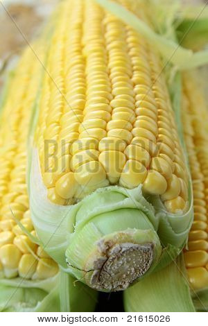 Closeup von Mais mit zusätzlichen Ähren im Hintergrund
