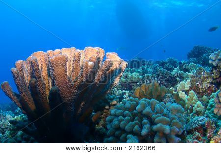 Lighted Coral Reef With Boat In Background