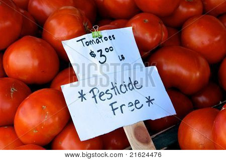 Pesticide Free Tomatoes