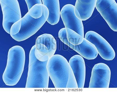 Bacillus Bacteria
