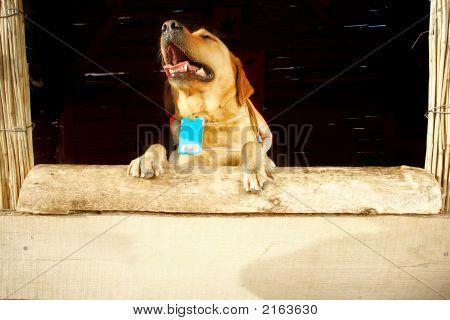 Dog At Wooden Reception Desk