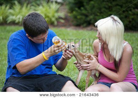 Boy And Girl Feeding Fawn