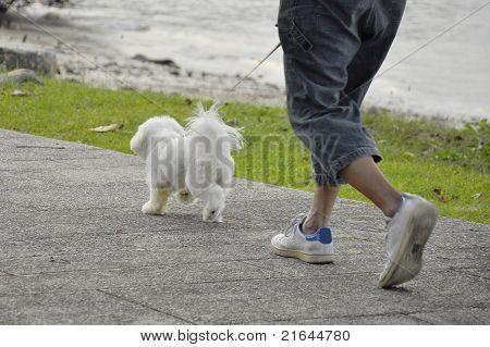 walking k9