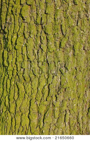 Background Of Green Bark