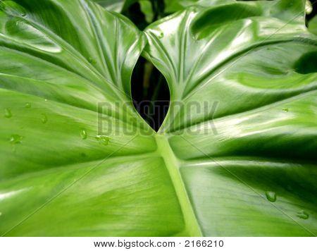Leaf Hawaii