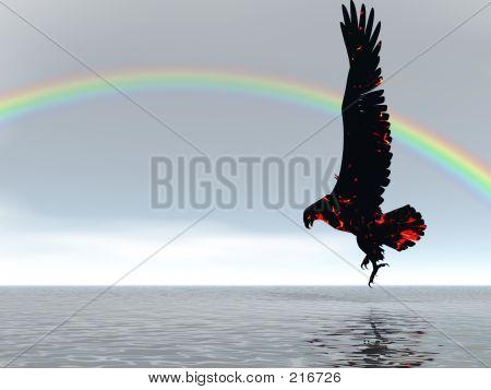 Eagle Rainbow