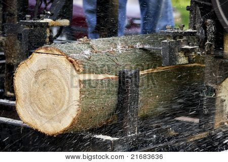 Tree Being Cut To Lumber