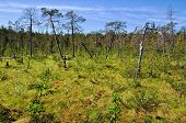 stock photo of boggy  - Boggy forest - JPG