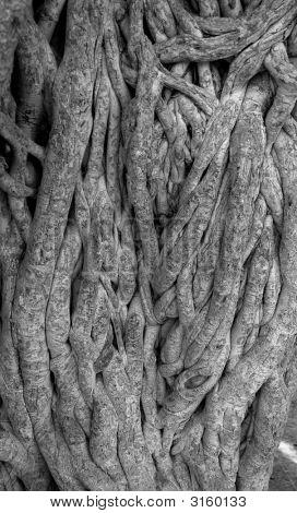 Verwirrt Baum