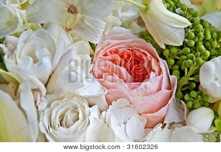 Pink English Rose Among White Roses