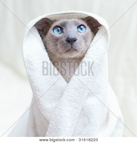 Hairless Cat in Towel