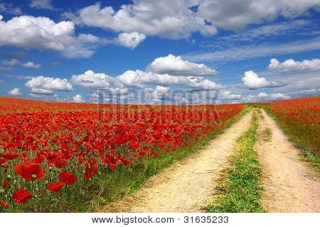 Poppies plantation
