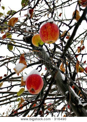 Apples Color