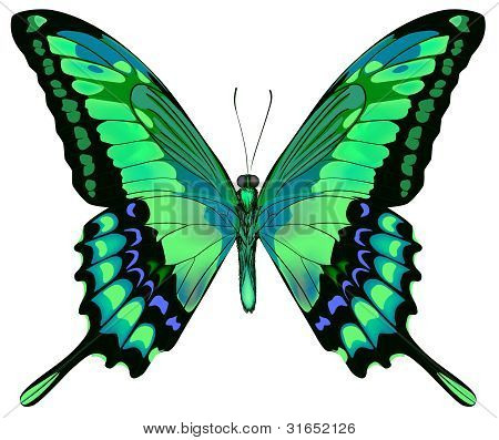 Ilustración del vector de la hermosa mariposa verde azul aislado sobre fondo blanco