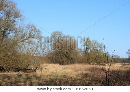 Floodplain Landscape