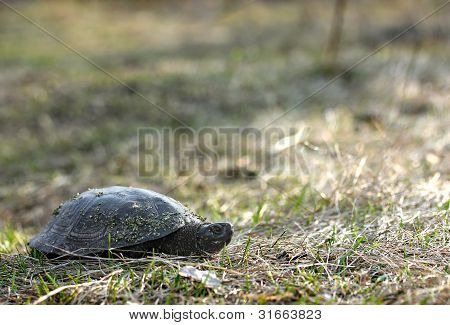 Turtle In A Forest Glade