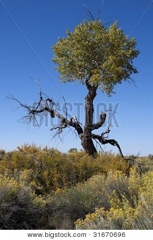Half Dead Tree In The High Desert Under Blue Sky.